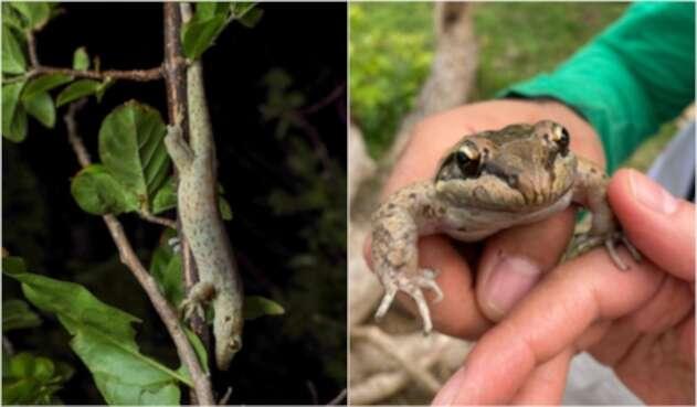 Especies endémicas halladas en la isla de Providencia.