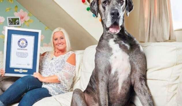 Freddy, el perro más grande del mundo