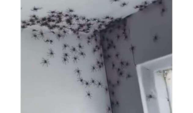 Así fue la invasión de arañas a la habitación de una niña.
