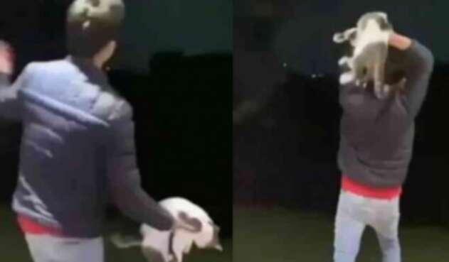 Indignación en redes por joven que maltrata a un gato en Antioquia