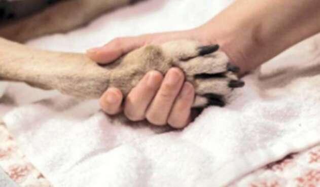 Pata de perro - Huella de perro
