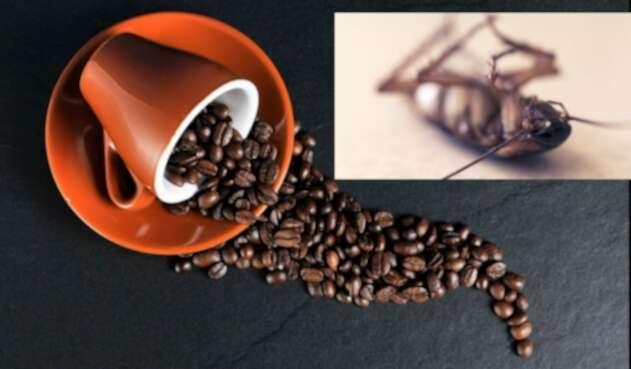 Café y cucarachas, la advertencia de un médico