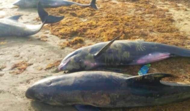 Delfines muertos en playas de Ghana