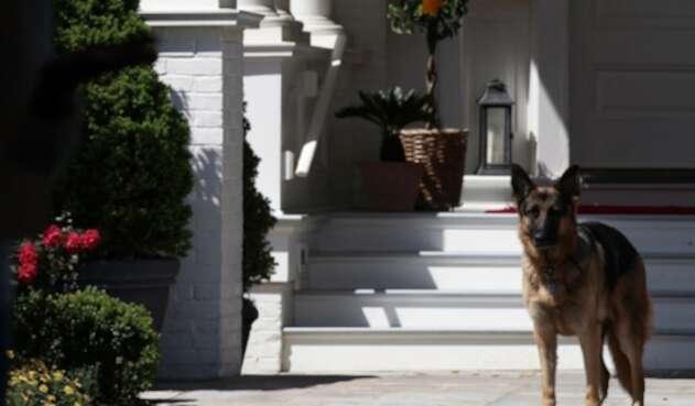 Champ, perro de Joe Biden
