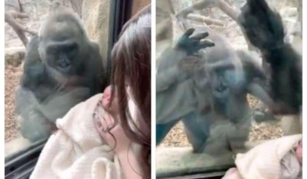 Mamá gorila y bebé