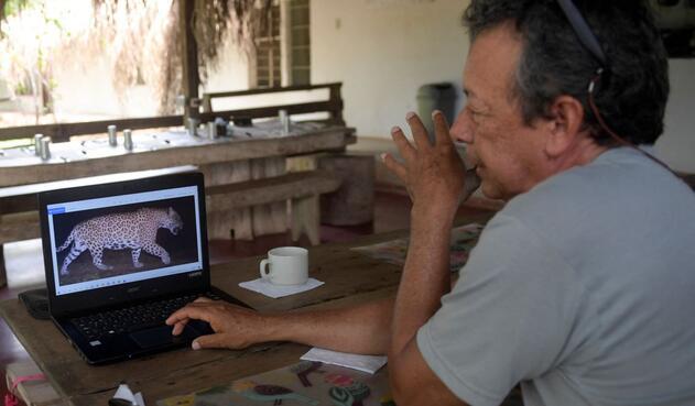 Ganadero colombiano que firmó la paz con el jaguar