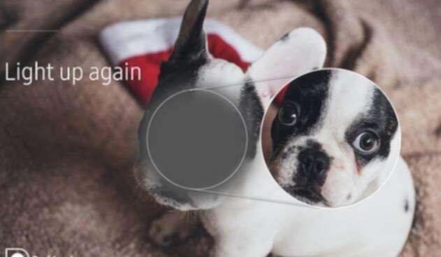 AppsSaludSam1.jpg