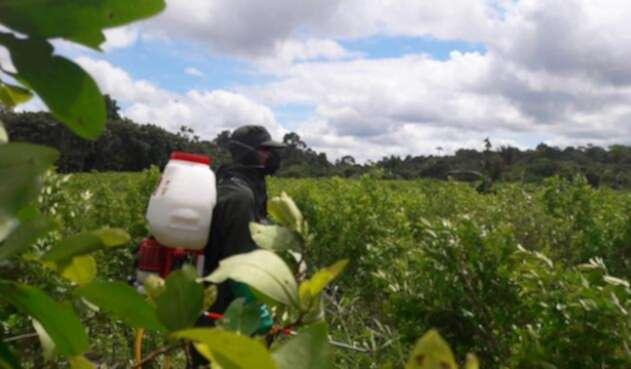 Cultivos-ilícitos-Colprensa-Alejandra-Bonilla.jpg