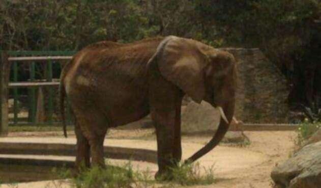Elefanta.jpg