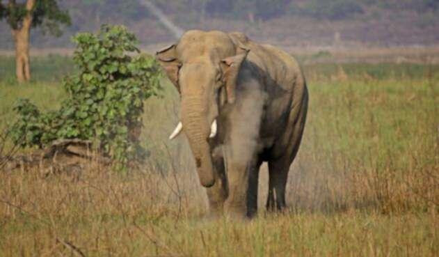 Elefantes-Ingimage.jpg
