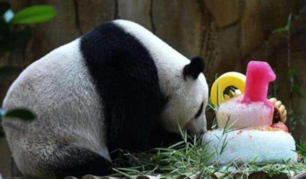 Liang-Liang-AFP.jpg