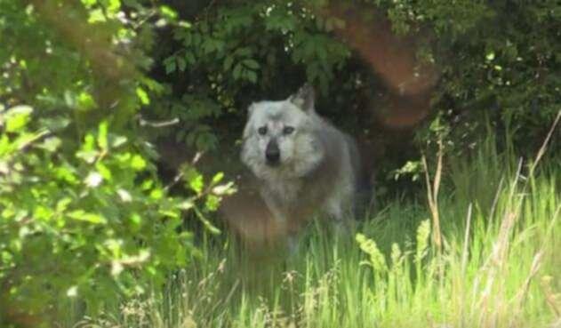 Lobos-y-osos-Grecia.jpg