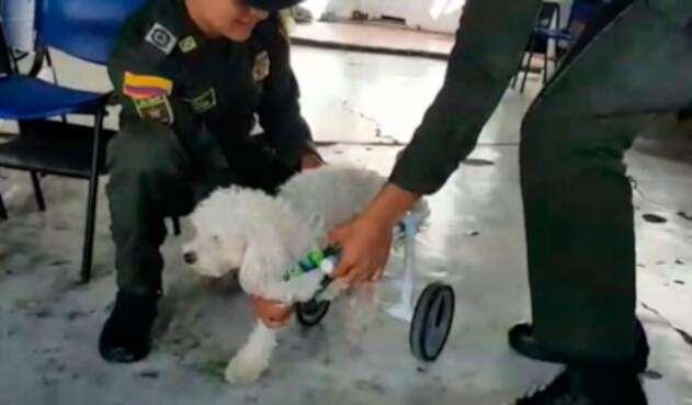 Lupita-perro-policía.jpg