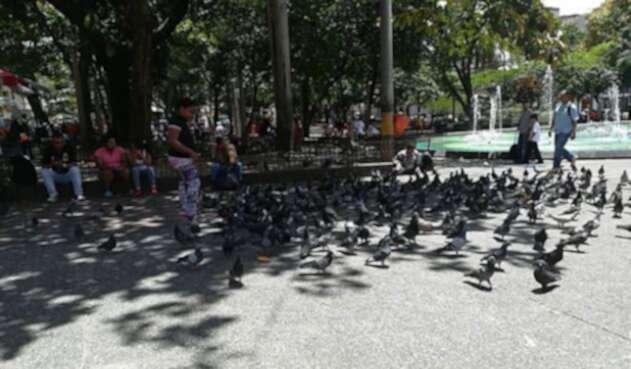 Palomas-parque-Bolivar_Foto_LAFM.jpg