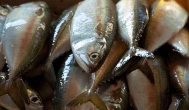 Uno de cada cinco pescados que se vende en Estados Unidos está mal etiquetado.
