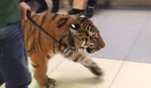 Tigre-LA-FM-Video.jpg