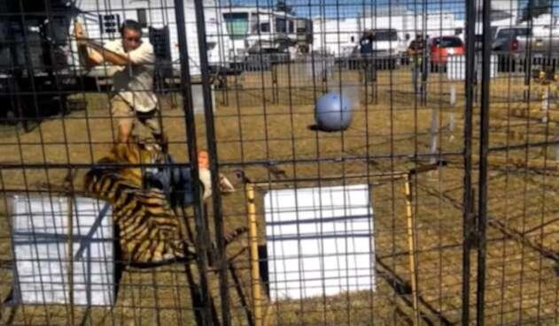 Tigre-LAFm-tomada-del-video.jpg