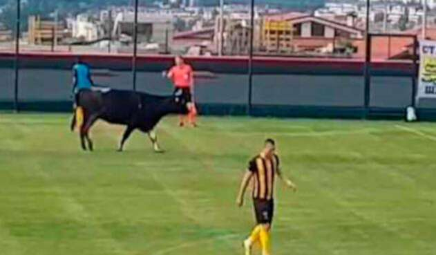 Vaca-en-campo-de-Fútbol-Captura-Youtube.jpg