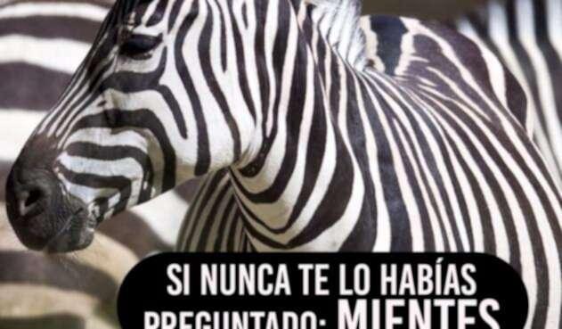 Zebra111.jpg
