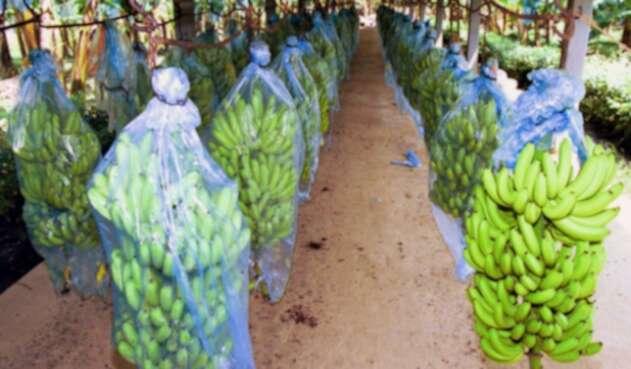 bananolafm-e1508332228514.jpg