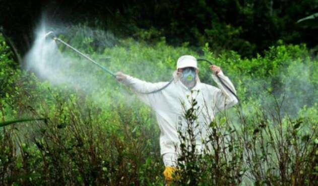 erradicación-manual-de-cultivos-ilicitos-en-Nariño-Colprensa.jpg
