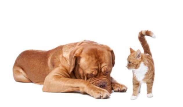 perro-gato-ingimage.jpg
