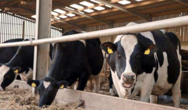 vaca-ingimage.jpg