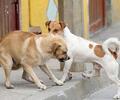 Perros callejeros en Ciudad Bolívar, Bogotá