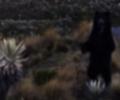 El oso es una especie en vía de extinción
