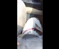 Perro ahogado en carro de Barranquilla